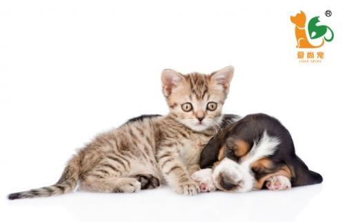 爱尚宠宠物