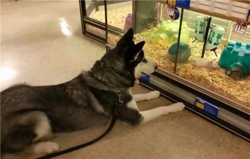 宠乐滋宠物店